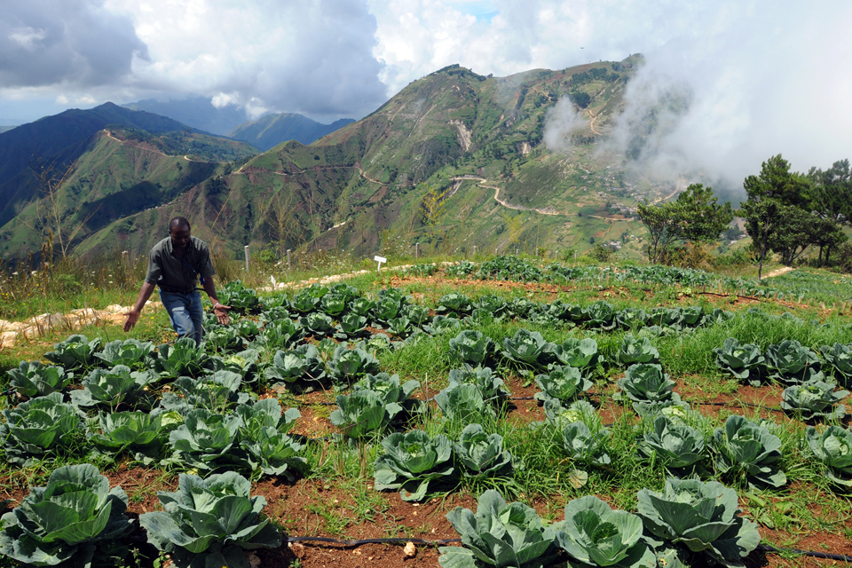 Report Details Effects of Haiti's Agricultural Development Plans
